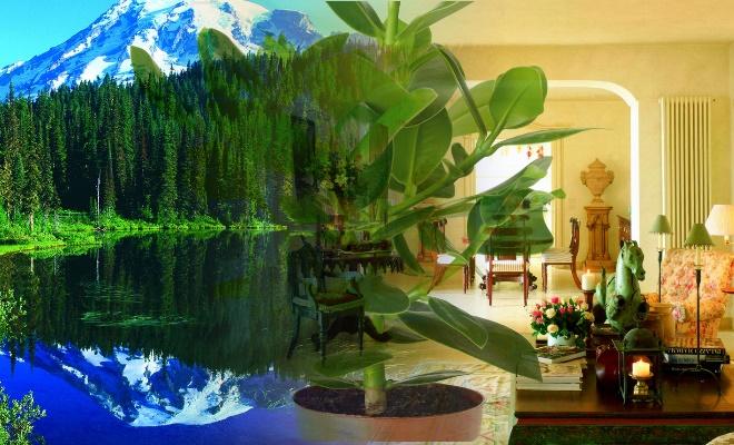 Многие растения очищают воздух